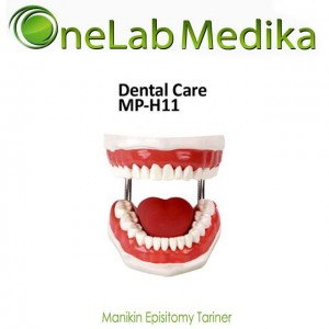 Manikin Dental Care ( Phantom Gigi )