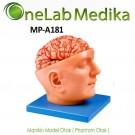 Manikin Model Otak ( Phantom Otak )