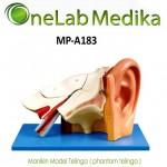Manikin Model Telinga ( phantom telinga )