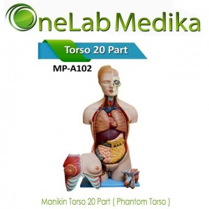 Manikin Torso 20 Part ( Phantom Torso )